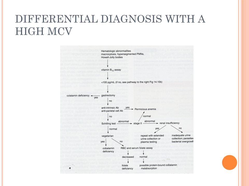 DIFFERENTIAL DIAGNOSIS WITH A HIGH MCV