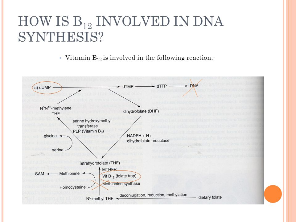 HOW IS B12 INVOLVED IN DNA SYNTHESIS