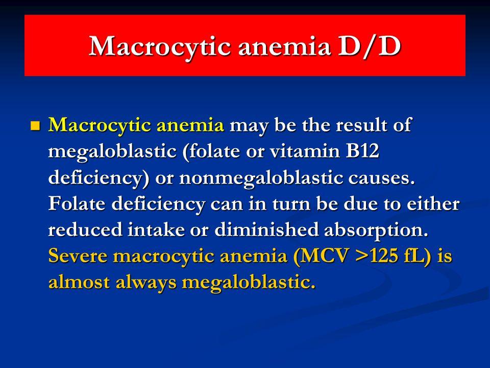 Macrocytic anemia D/D