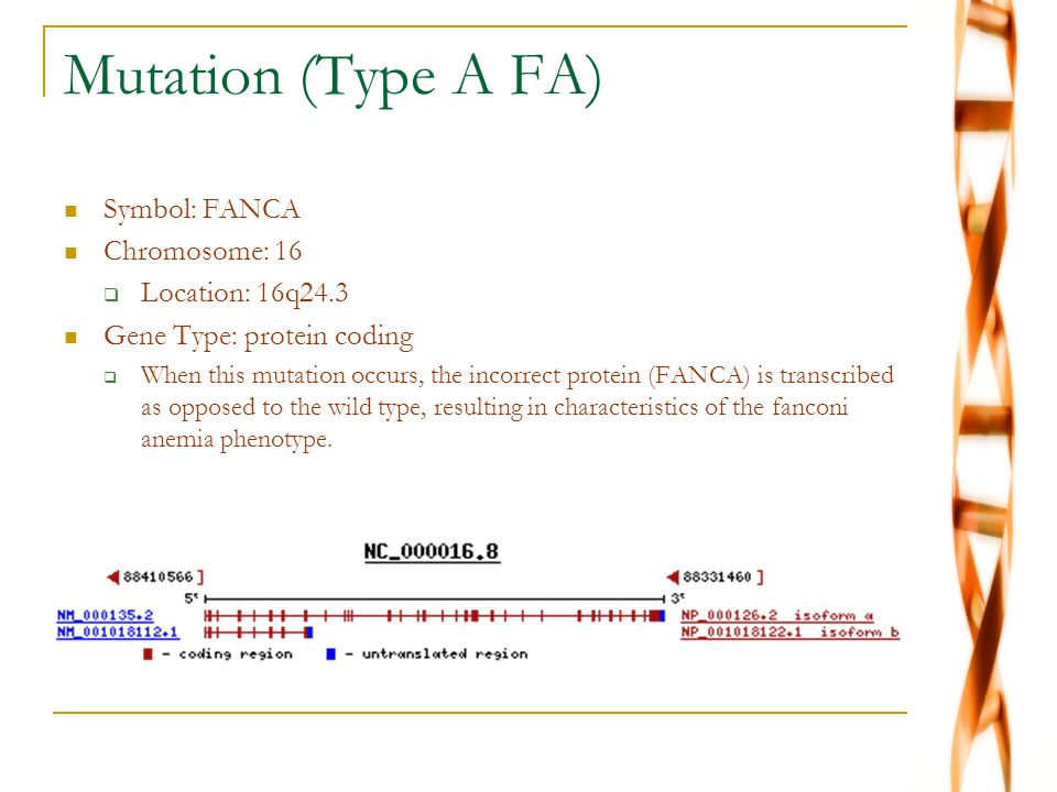 Mutation (Type A FA) Symbol: FANCA Chromosome: 16 Location: 16q24.3