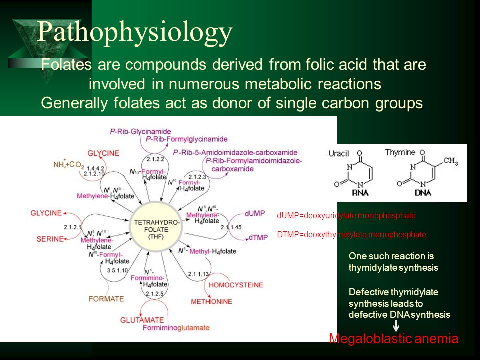 Pathophysiology Folates are compounds derived from folic acid that are