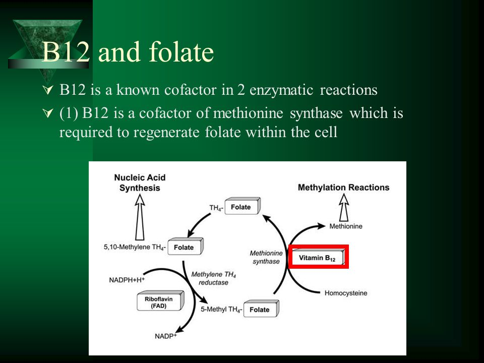 B12 and folate B12 is a known cofactor in 2 enzymatic reactions