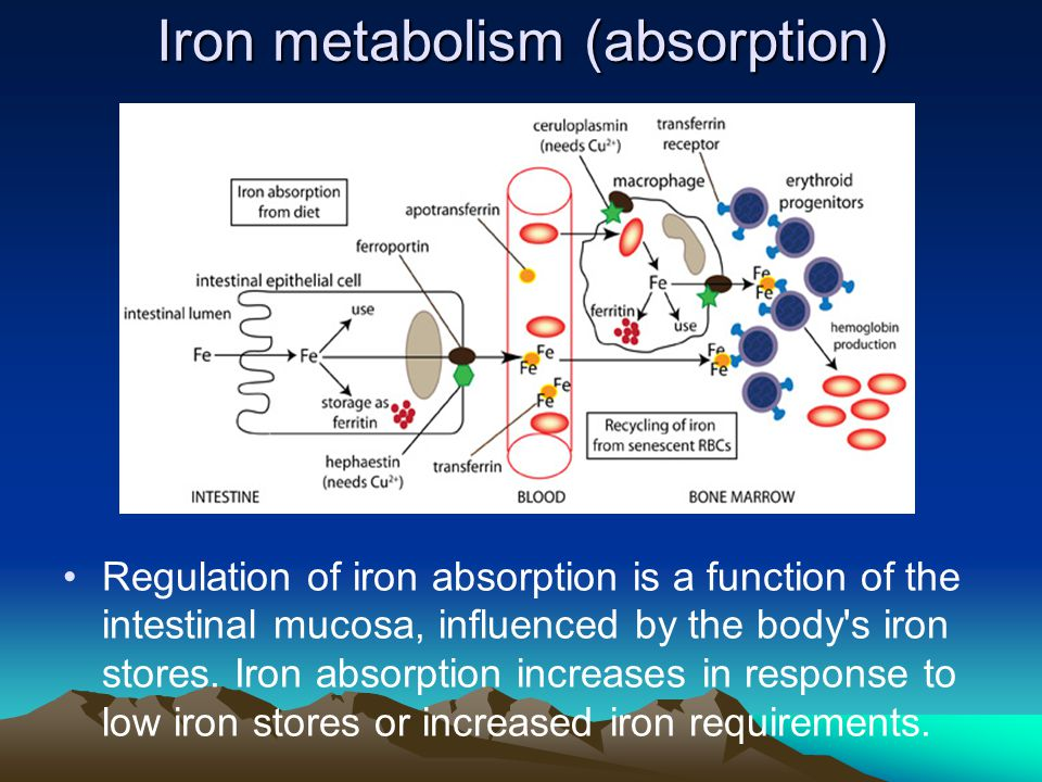 Iron metabolism (absorption)