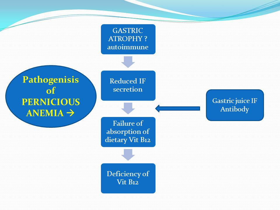 Pathogenisis of PERNICIOUS ANEMIA 