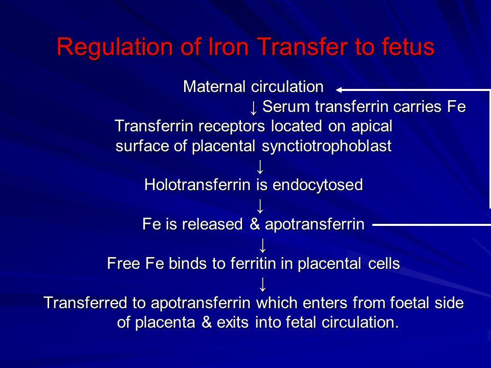 Regulation of Iron Transfer to fetus