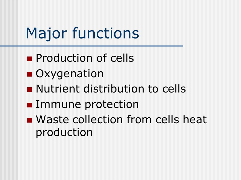 Major functions Production of cells Oxygenation