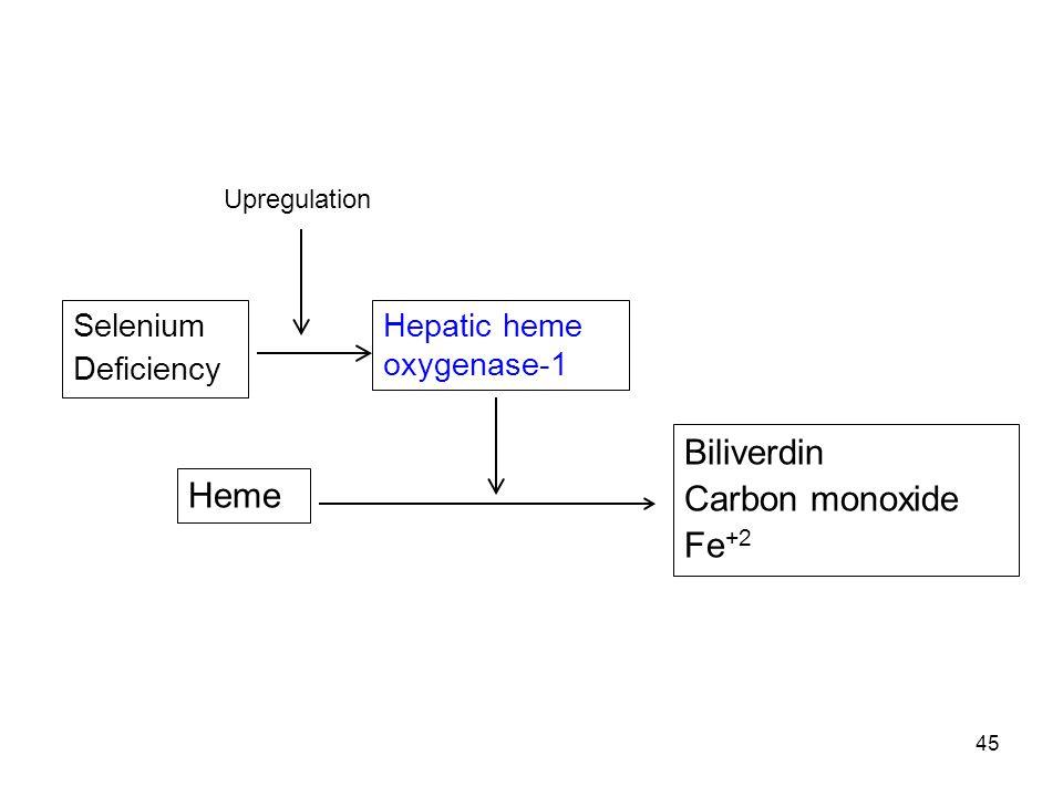Biliverdin Carbon monoxide Heme Fe+2 Selenium Deficiency
