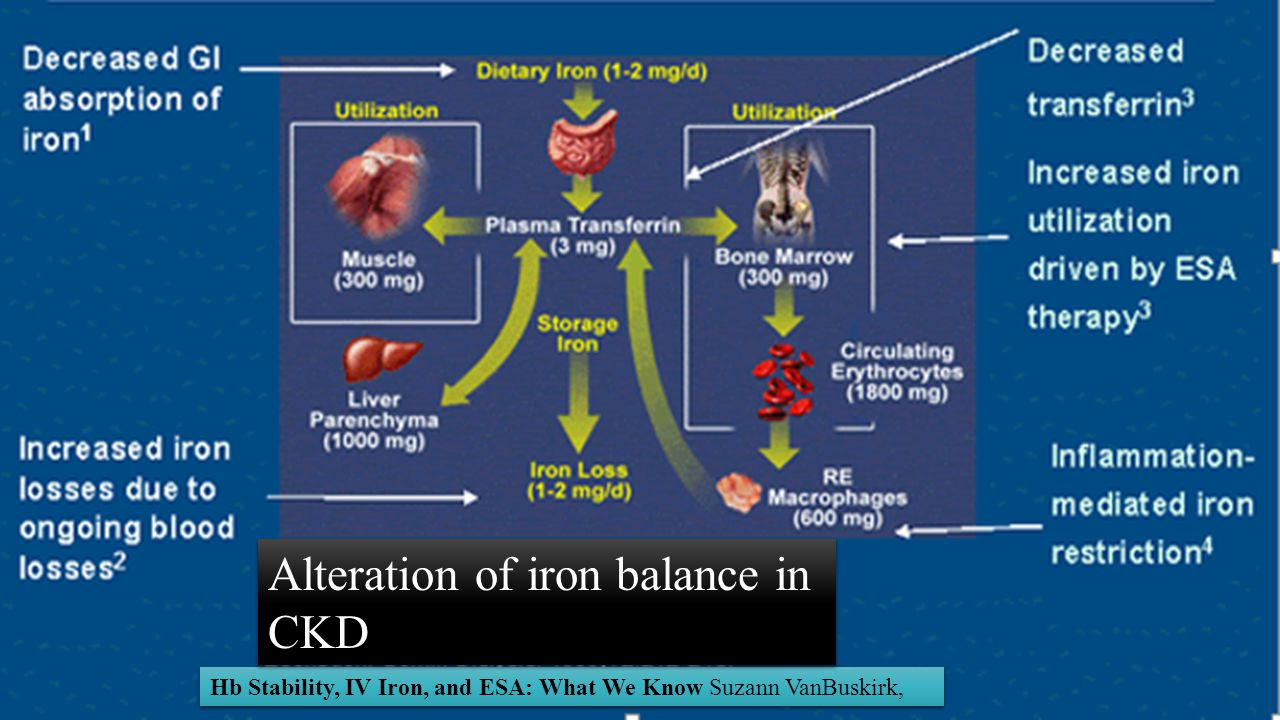 Alteration of iron balance in CKD