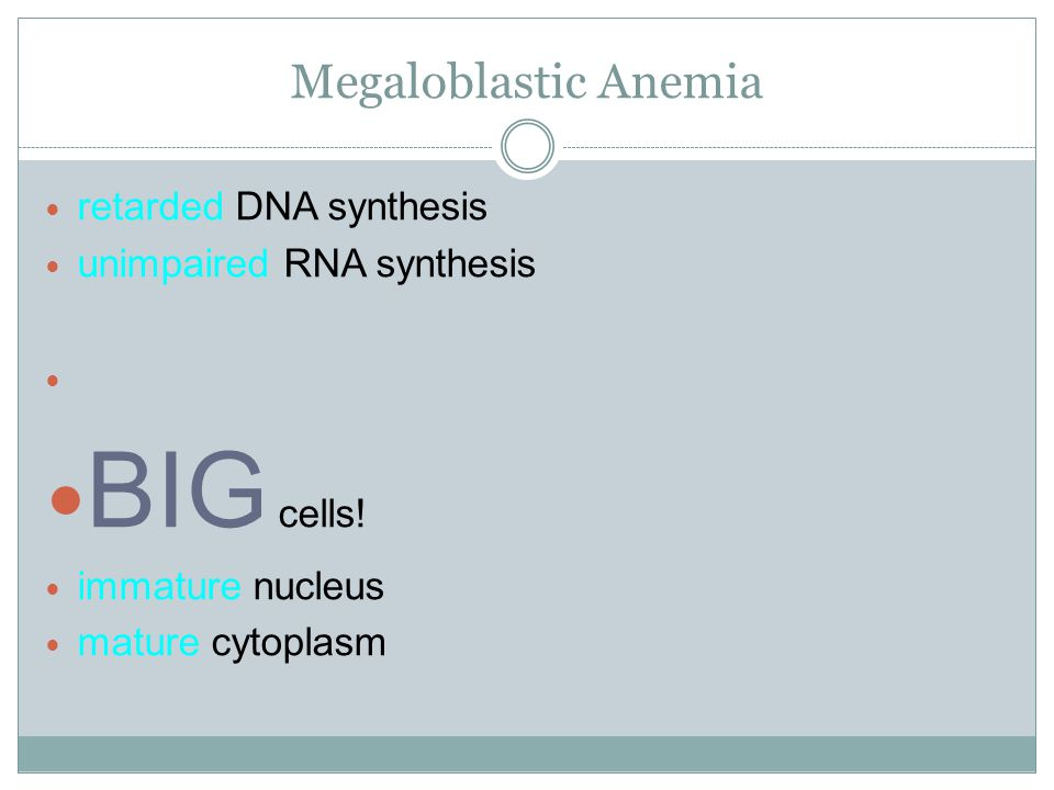 BIG cells! Megaloblastic Anemia retarded DNA synthesis