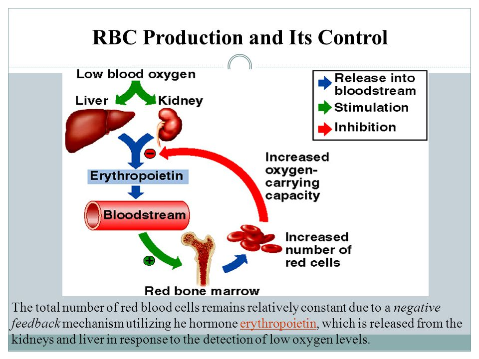 RBC Production and Its Control