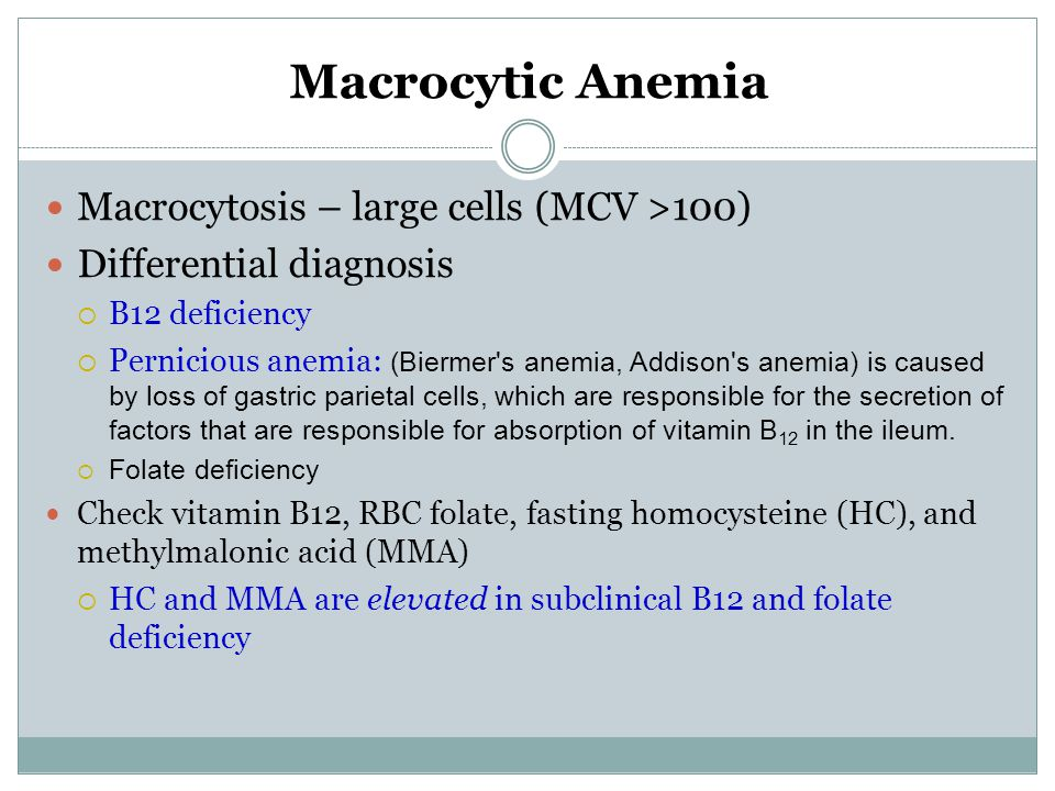 Macrocytic Anemia Macrocytosis – large cells (MCV >100)