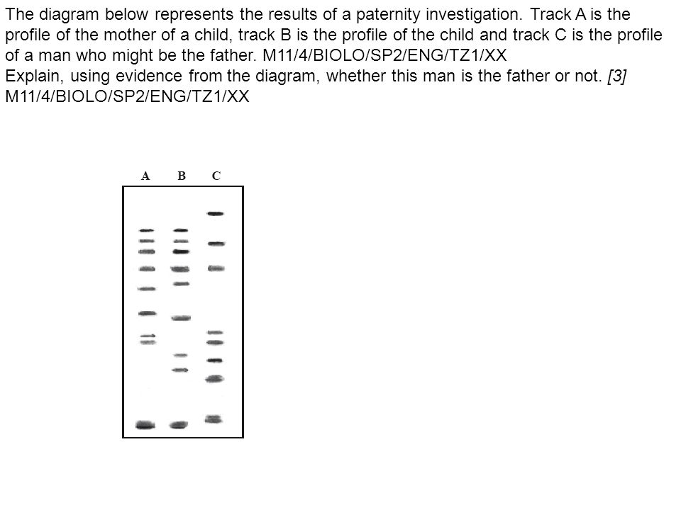 The diagram below represents the results of a paternity investigation