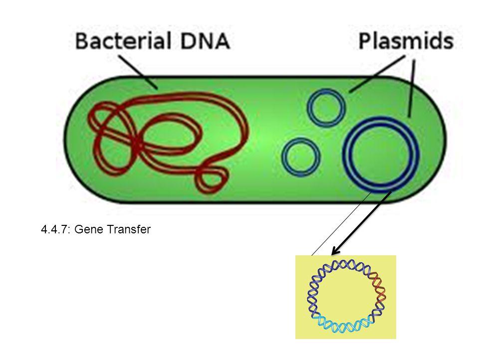 4.4.7: Gene Transfer