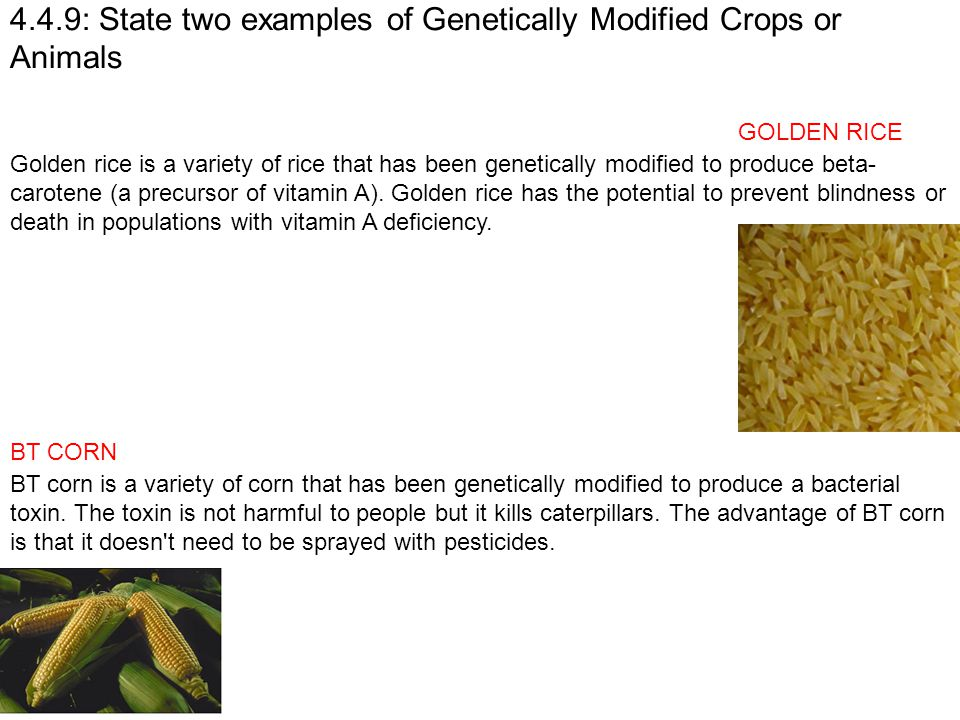 4.4.9: State two examples of Genetically Modified Crops or Animals