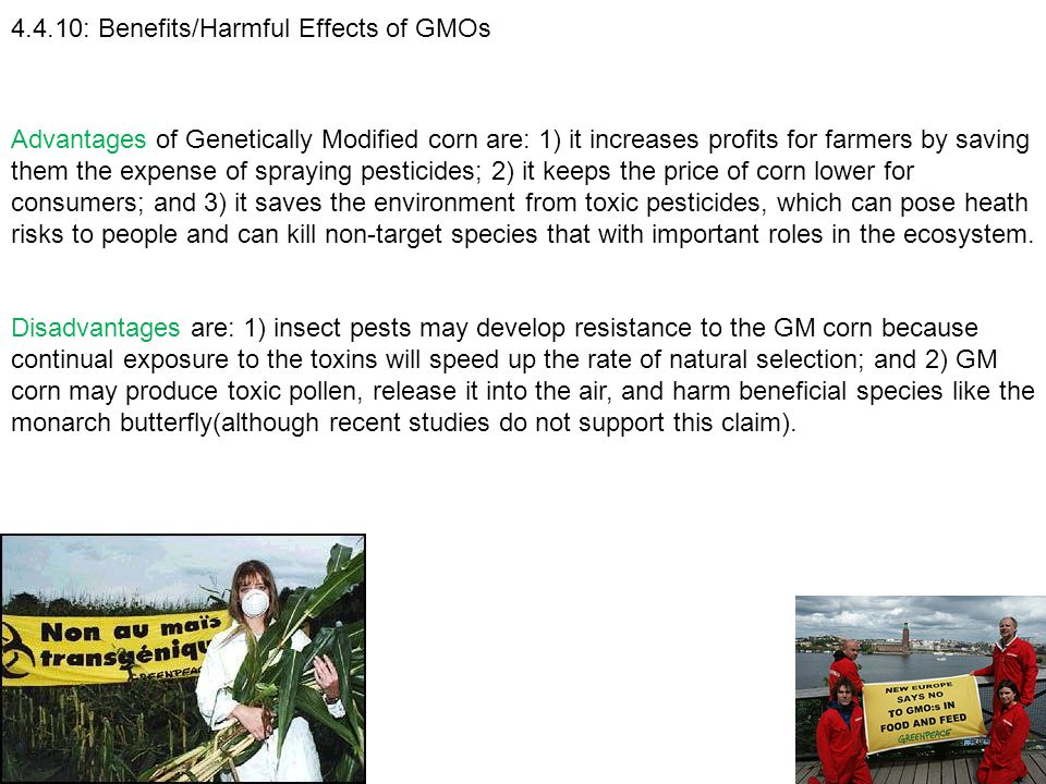4.4.10: Benefits/Harmful Effects of GMOs