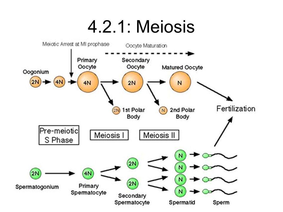 4.2.1: Meiosis
