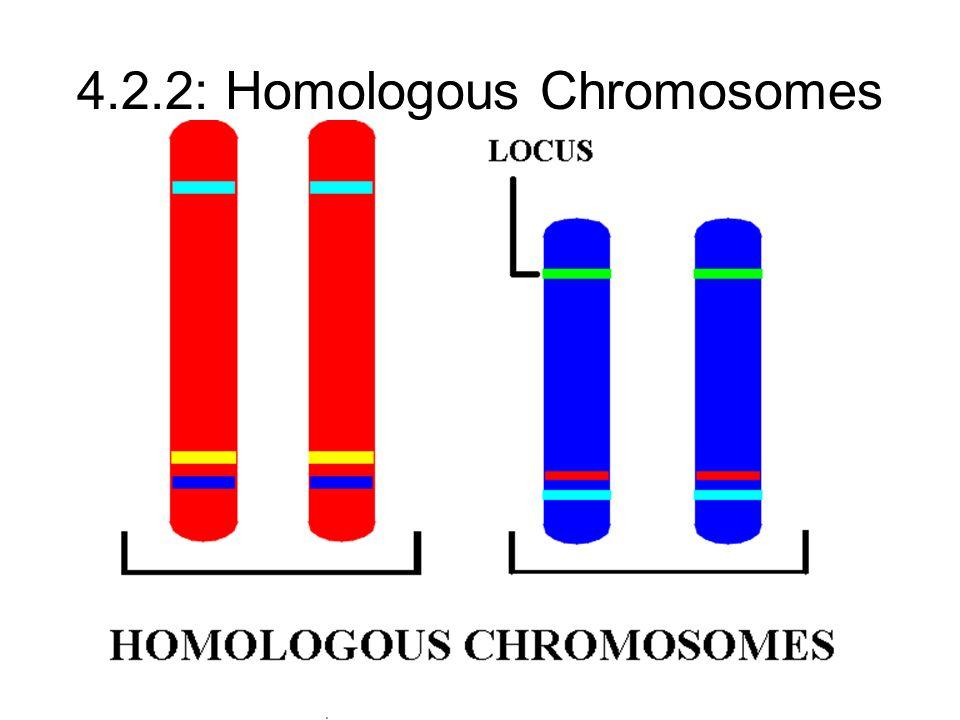 4.2.2: Homologous Chromosomes