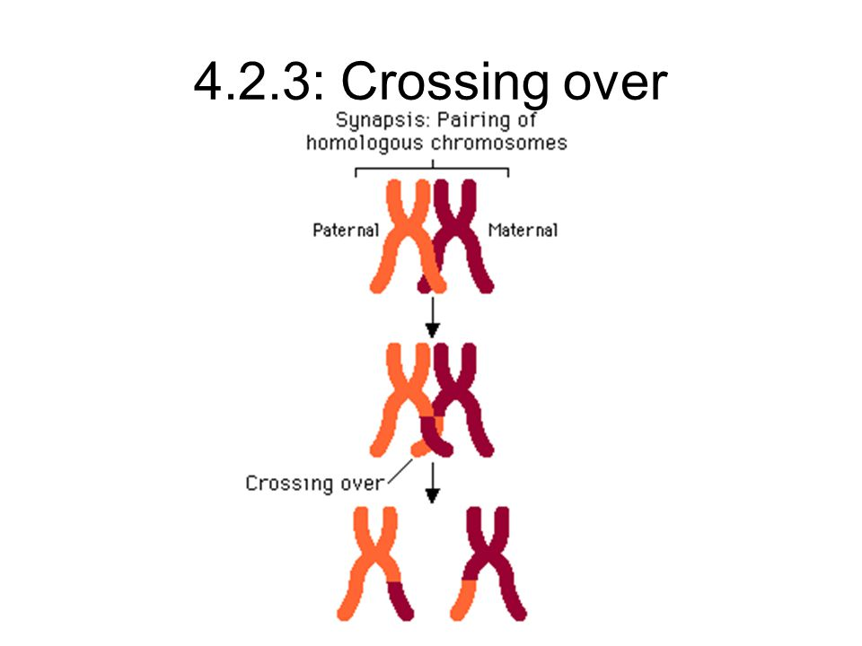 4.2.3: Crossing over