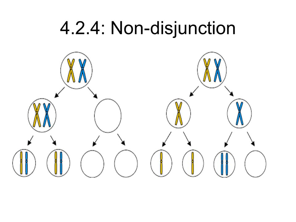 4.2.4: Non-disjunction
