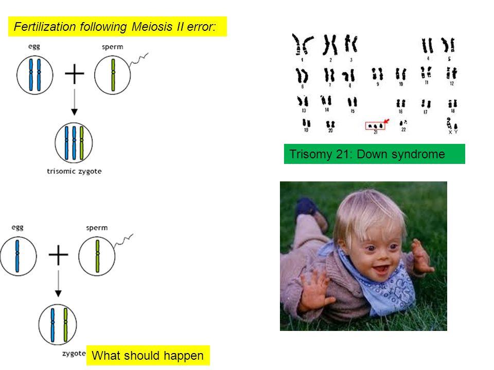 Fertilization following Meiosis II error: