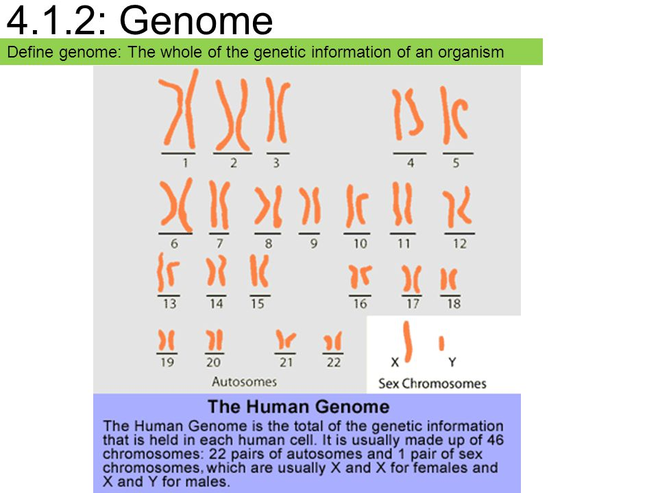 4.1.2: Genome Define genome: The whole of the genetic information of an organism