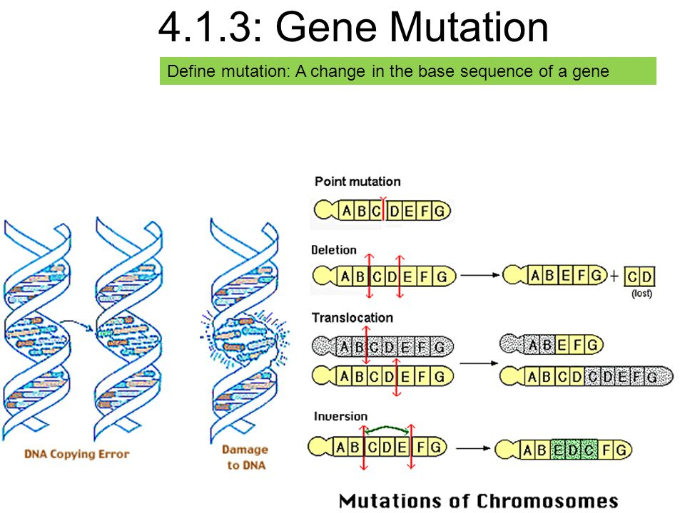 4.1.3: Gene Mutation Define mutation: A change in the base sequence of a gene