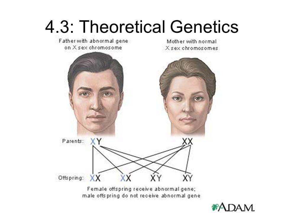 4.3: Theoretical Genetics