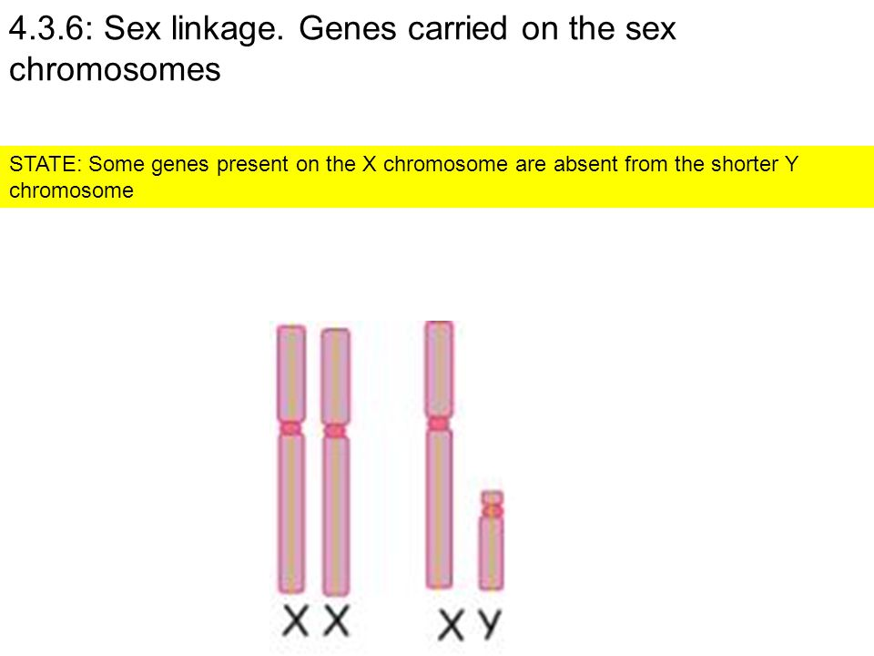 4.3.6: Sex linkage. Genes carried on the sex chromosomes