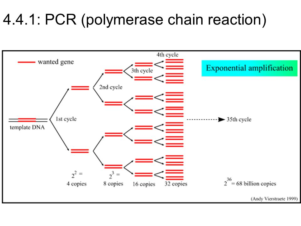 4.4.1: PCR (polymerase chain reaction)