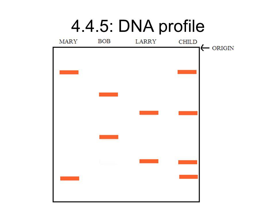 4.4.5: DNA profile