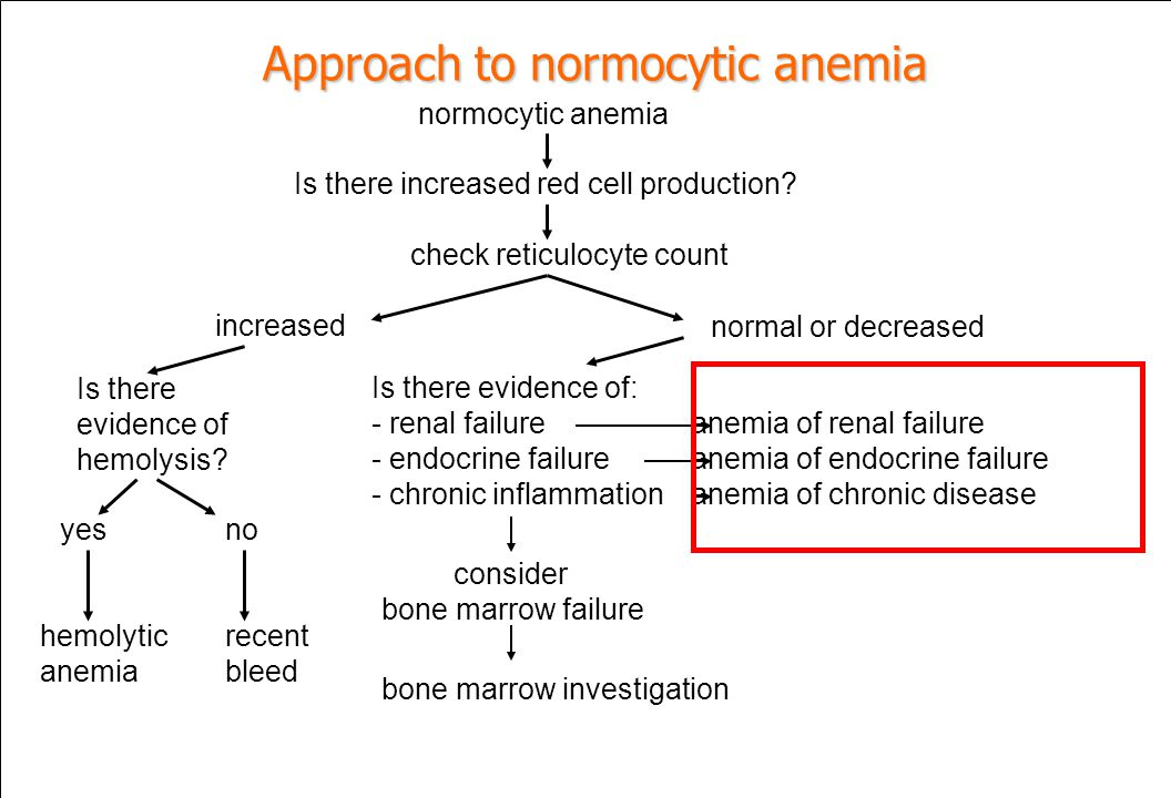 Approach to normocytic anemia