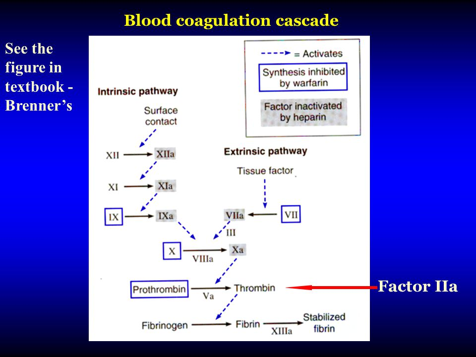 Blood coagulation cascade