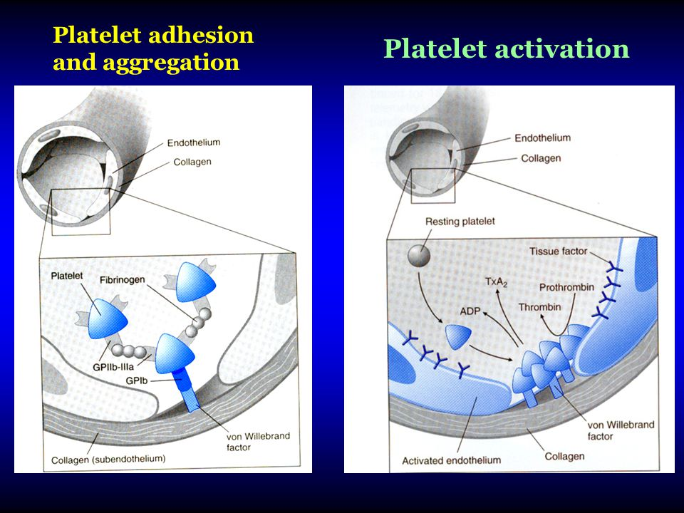 Platelet adhesion and aggregation