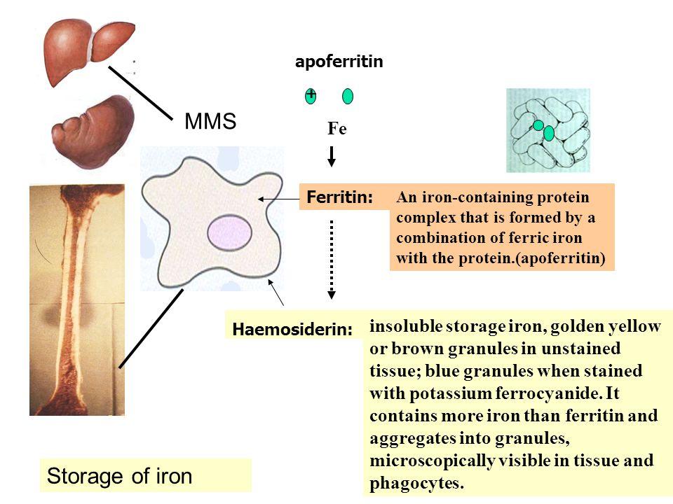 MMS Storage of iron apoferritin + Fe