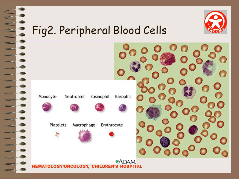 Fig2. Peripheral Blood Cells