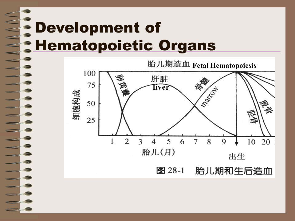 Development of Hematopoietic Organs