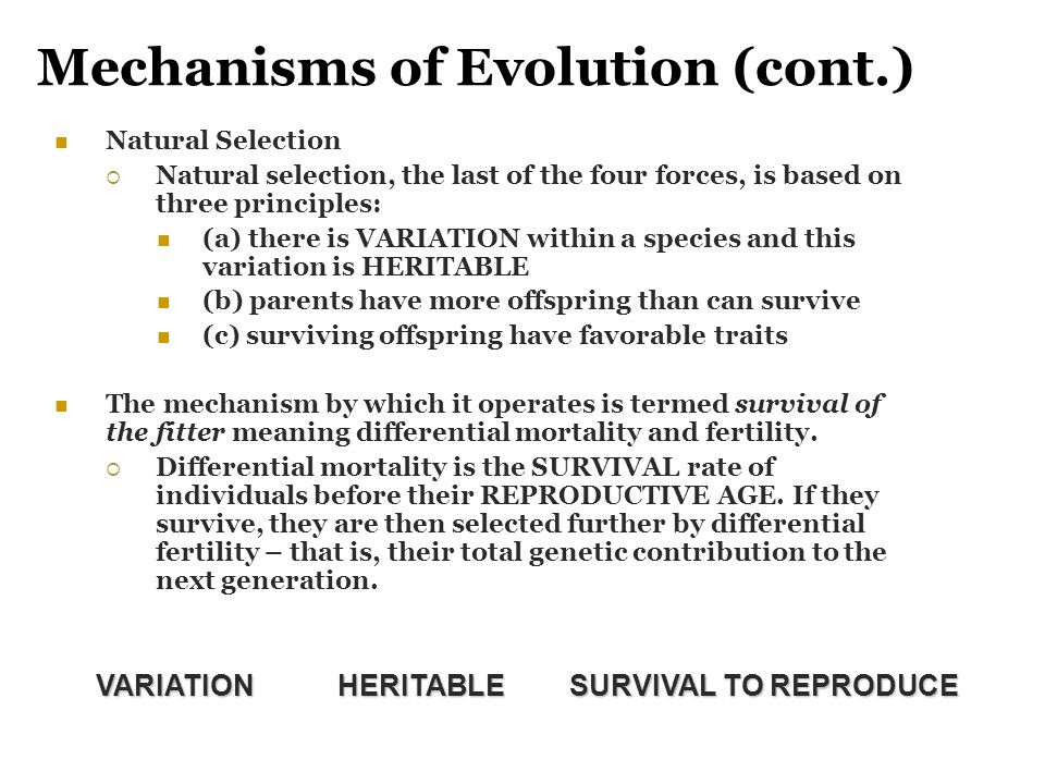 Mechanisms of Evolution (cont.)
