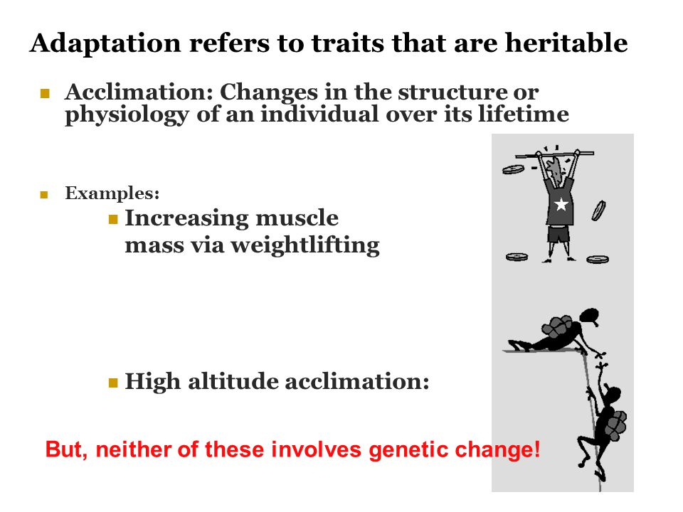 Adaptation refers to traits that are heritable
