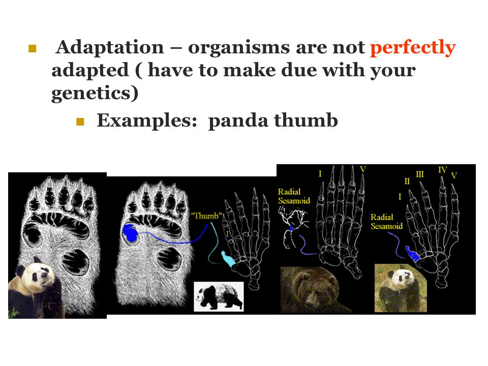 Adaptation – organisms are not perfectly adapted ( have to make due with your genetics)