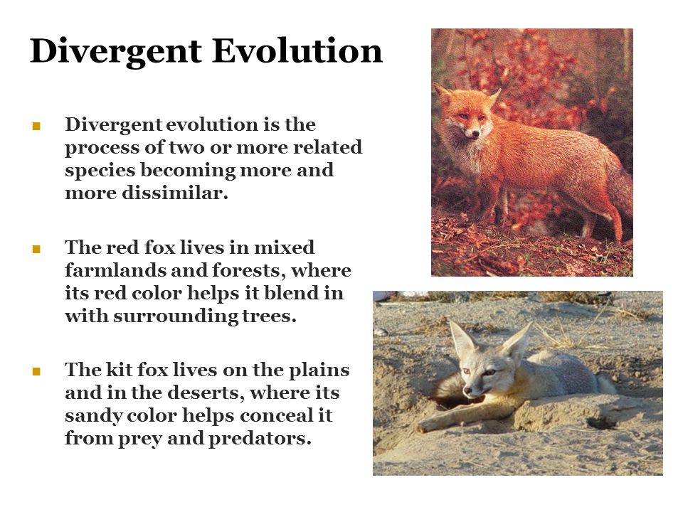 Divergent Evolution Divergent evolution is the process of two or more related species becoming more and more dissimilar.