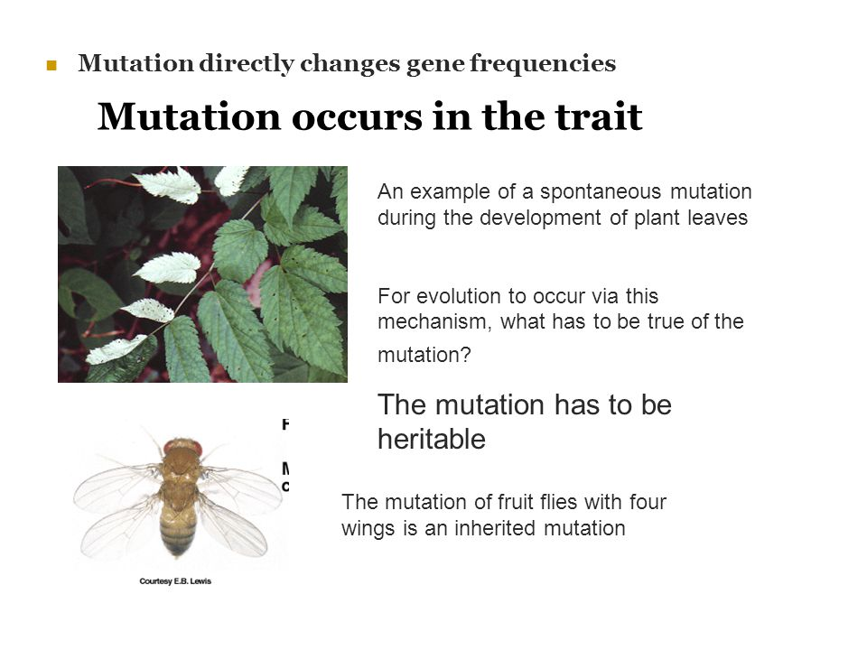 Mutation occurs in the trait