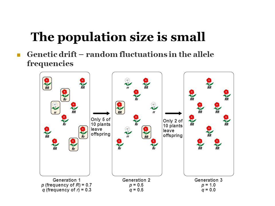 The population size is small