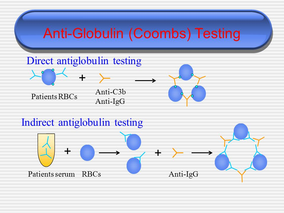 Anti-Globulin (Coombs) Testing