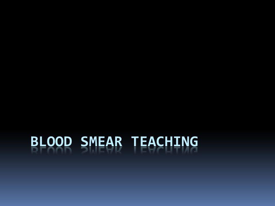Blood smear teaching