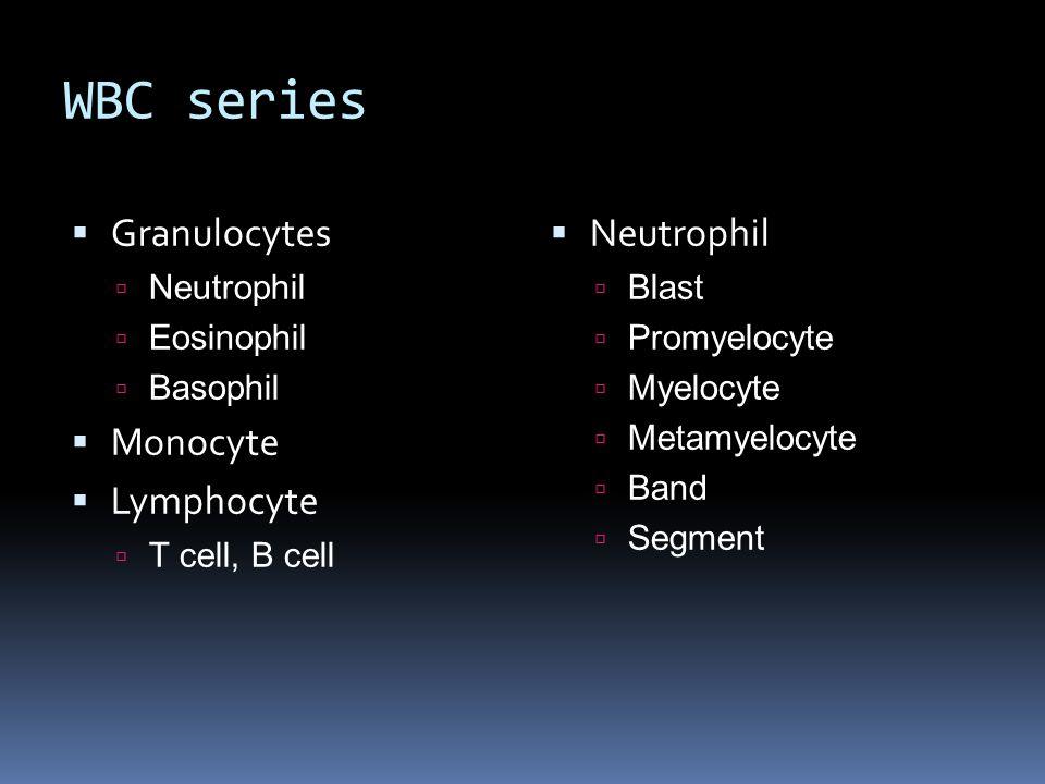 WBC series Granulocytes Monocyte Lymphocyte Neutrophil Neutrophil