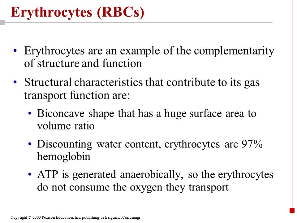 Erythrocytes (RBCs) Erythrocytes are an example of the complementarity of structure and function.