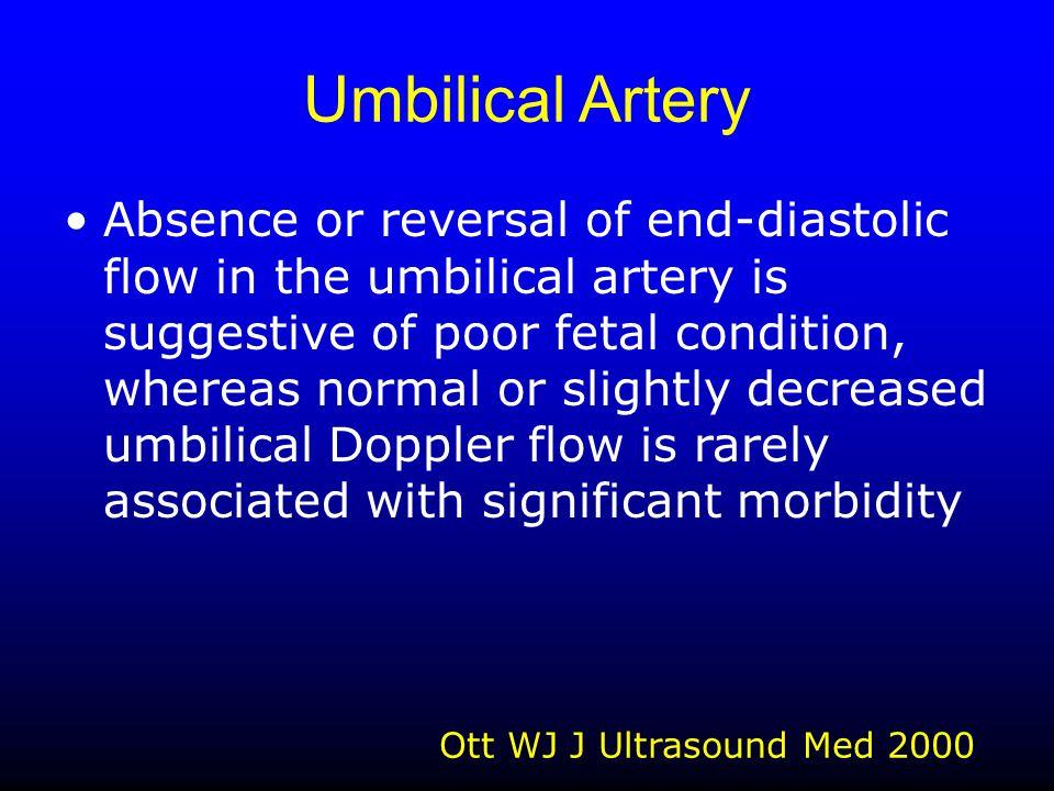 Umbilical Artery