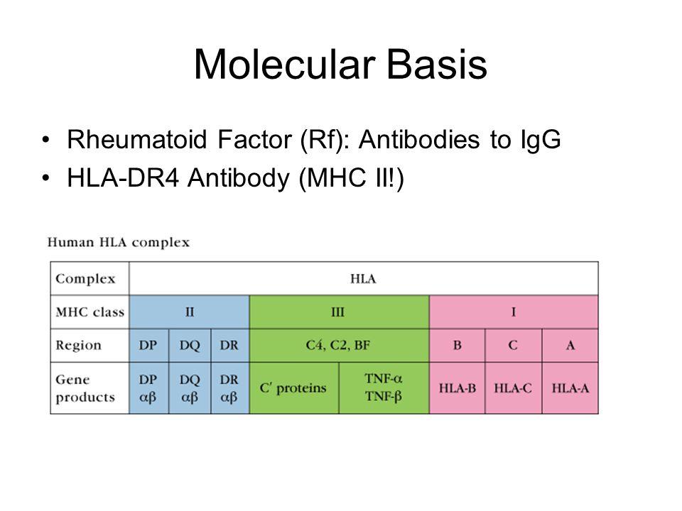 Molecular Basis Rheumatoid Factor (Rf): Antibodies to IgG