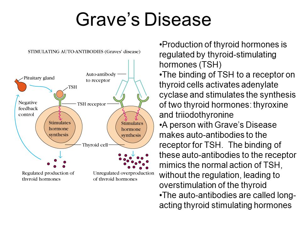 Grave's Disease Production of thyroid hormones is regulated by thyroid-stimulating hormones (TSH)