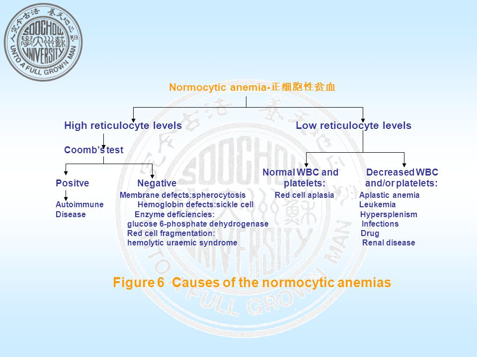 Normocytic anemia-正细胞性贫血 Figure 6 Causes of the normocytic anemias